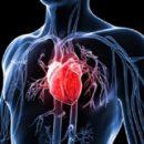 Kardiovaskularni sistem