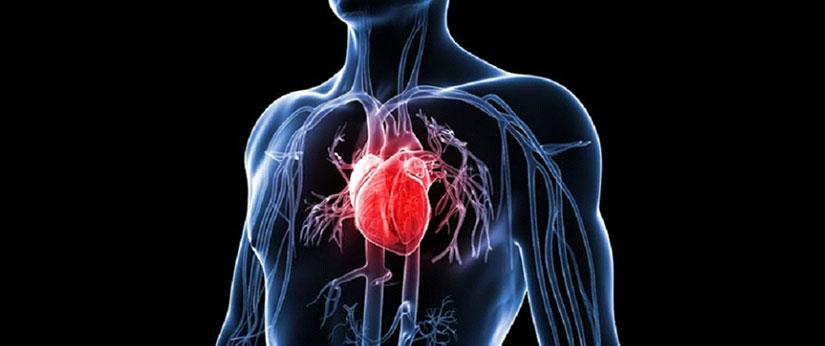 Kolegium Medic Klinika Beograd Internista Kardiovaskularni Sistem