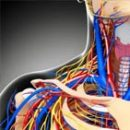 Karotidne arterije