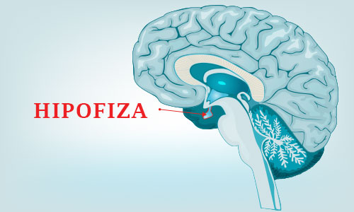 Hipofiza - Kolegium Medic